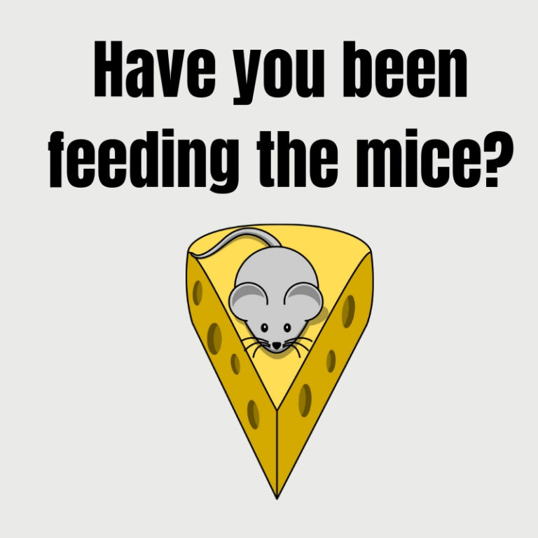 "Mouse on cheese with text ""have you been feeding the mice?"""